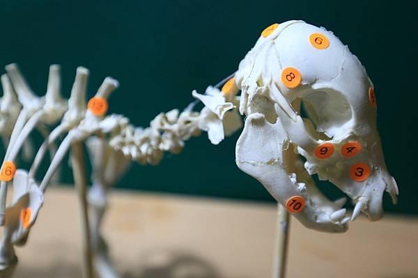 骨骼 (4).JPG