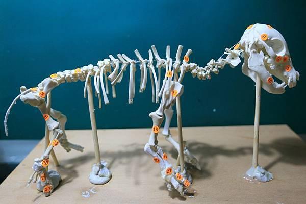 骨骼 (2).JPG