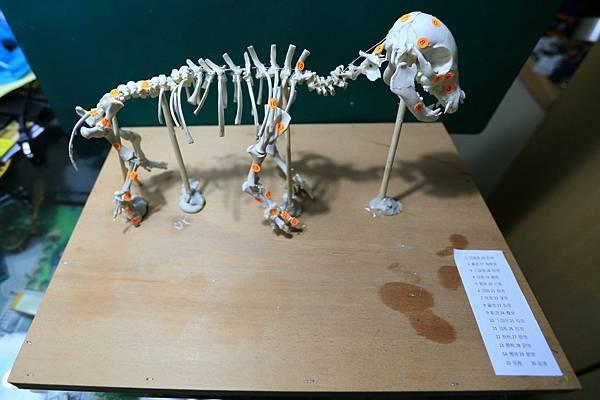 骨骼 (3).JPG