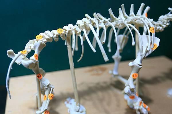 骨骼 (7).JPG