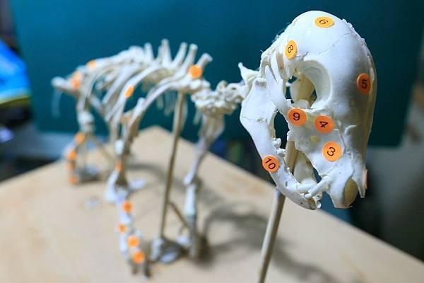 骨骼 (8).JPG