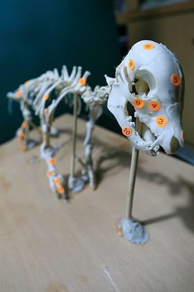 骨骼 (9).JPG