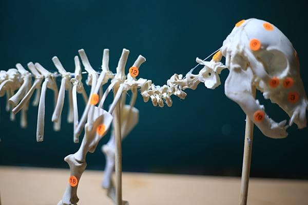 骨骼 (13).JPG