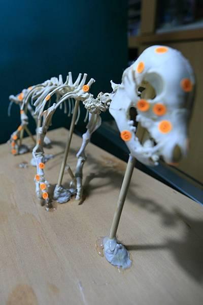 骨骼 (10).JPG