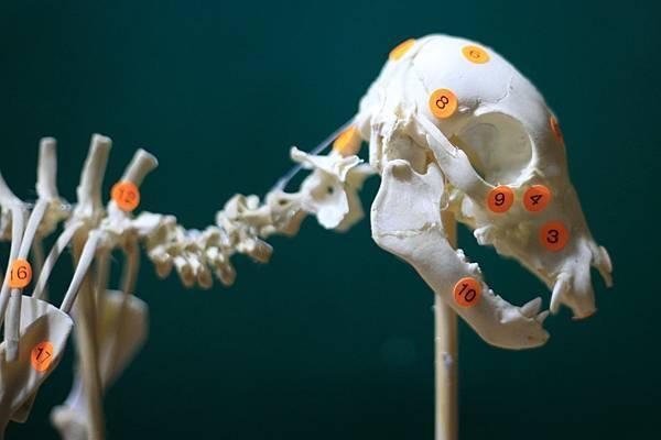 骨骼 (12).JPG