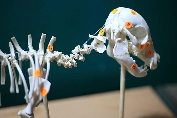 骨骼 (18).JPG