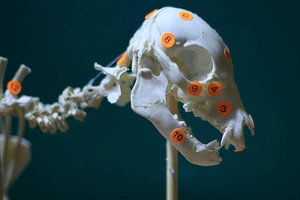 骨骼 (20).JPG