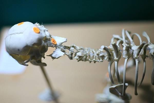 骨骼 (22).JPG