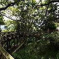 棲蘭森林遊樂區 (1).JPG