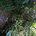 棲蘭森林遊樂區 (16).JPG