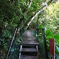 棲蘭森林遊樂區 (15).JPG