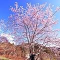 武陵農場 (6).JPG