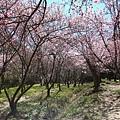 武陵農場 (17).JPG