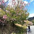 武陵農場 (37).JPG