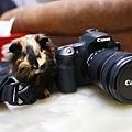 天竺鼠偷米_200704 (5).jpg
