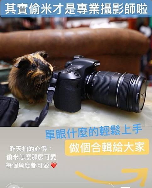 天竺鼠偷米_200704 (19).jpg