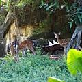 台北市立動物園 (1).JPG