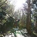 太平山 (3).JPG