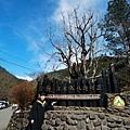 武陵農場 (4).JPG