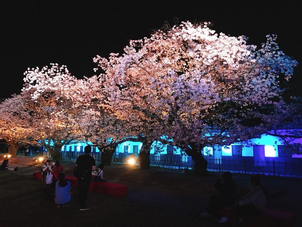 20180402湯布院福岡櫻花日day4_180403_0085.jpg