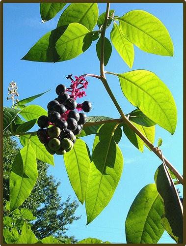 fruit02.jpg