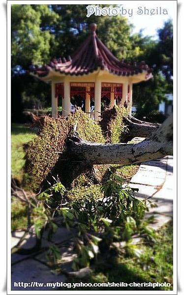 颱風過後1.jpg
