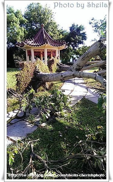 颱風過後14.jpg
