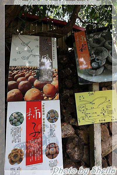 秋曬柿餅5.JPG