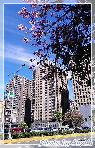 竹北美人樹33 (1).jpg