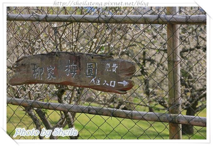 柳家梅園2.JPG