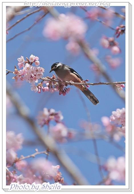 花鳥圖7.JPG