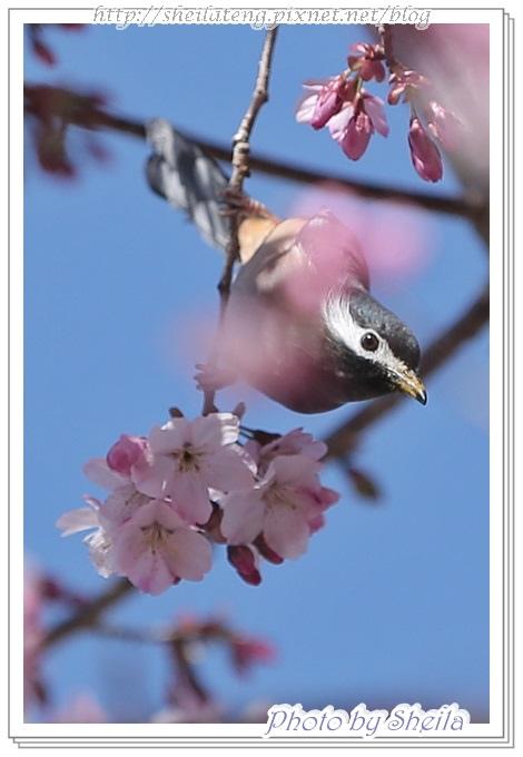 花鳥圖12.JPG