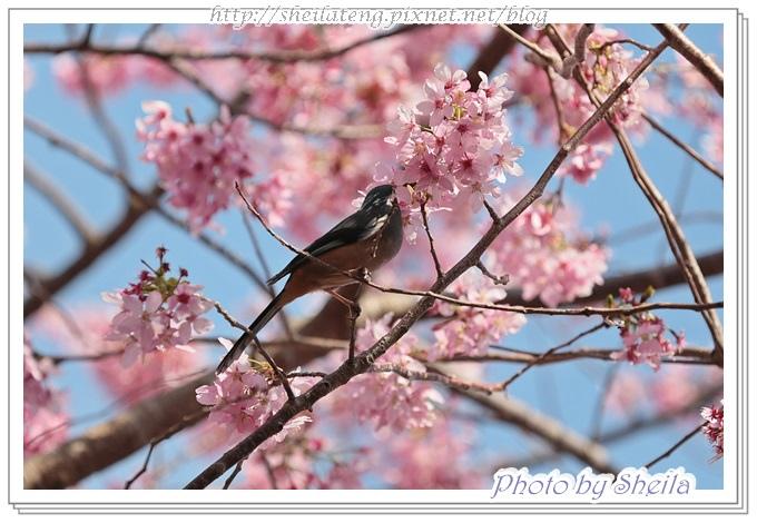 花鳥圖20.JPG