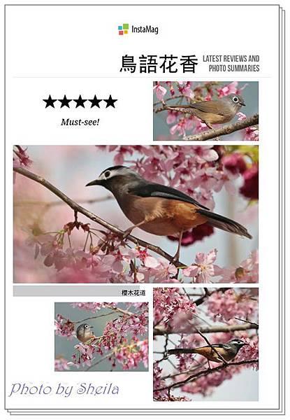花鳥圖40.jpg