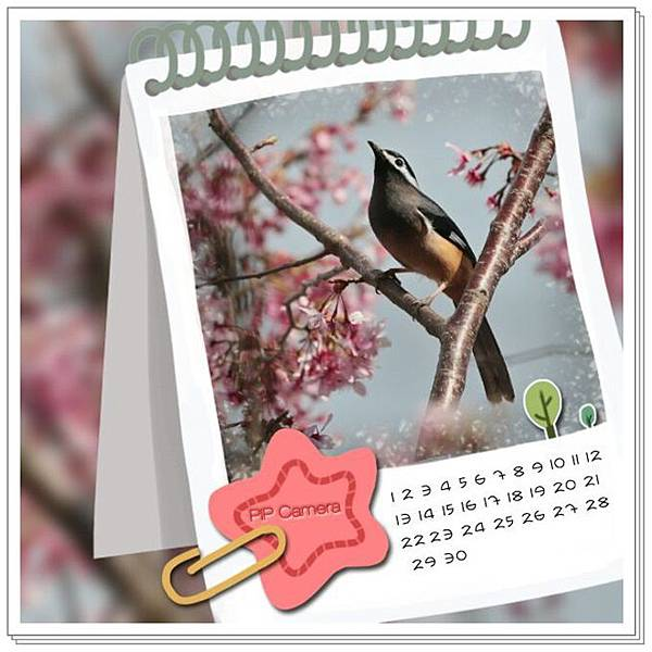 花鳥圖41.jpg