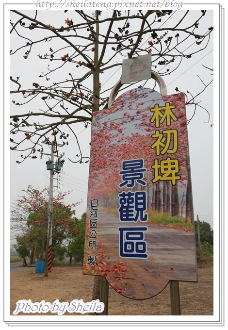 學甲蜀葵48.JPG