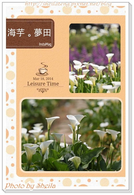 竹子湖海芋2.jpg