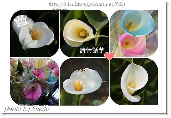 竹子湖海芋1.jpg