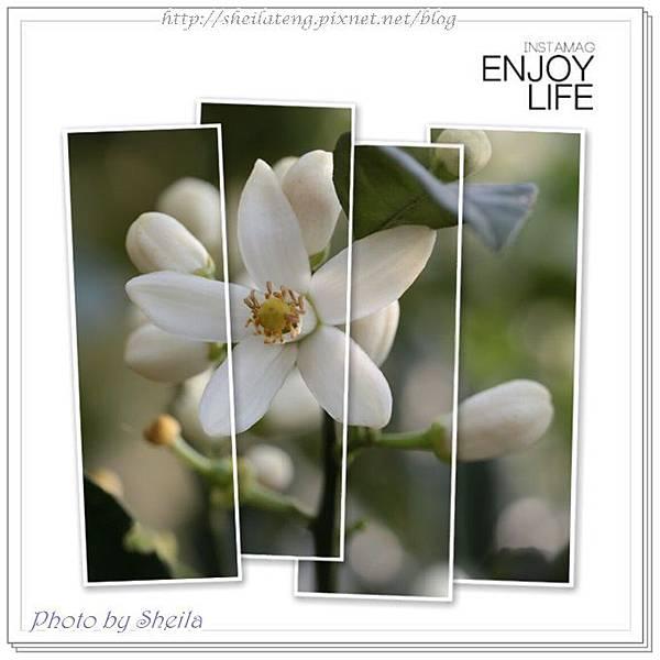 柚子飄香1.jpg
