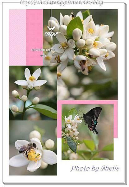 柚子飄香24.jpg