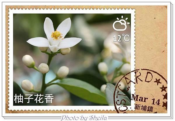 柚子飄香25.jpg