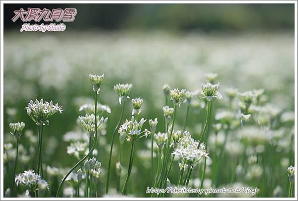 九月雪blog4.JPG