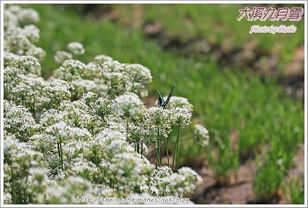 九月雪blog12.JPG