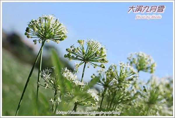 九月雪blog17.JPG