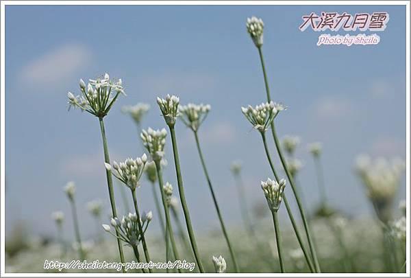 九月雪blog18.JPG