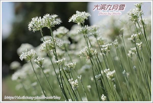 九月雪blog19.JPG
