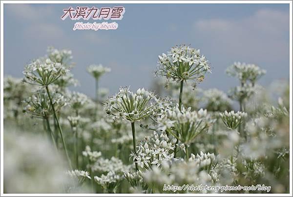 九月雪blog22.JPG