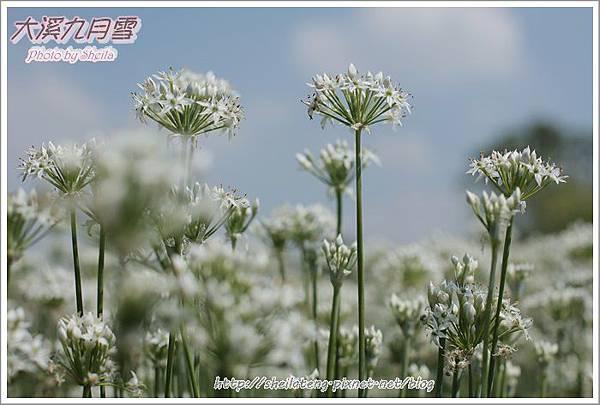 九月雪blog25.JPG