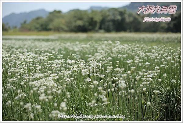 九月雪blog30.JPG