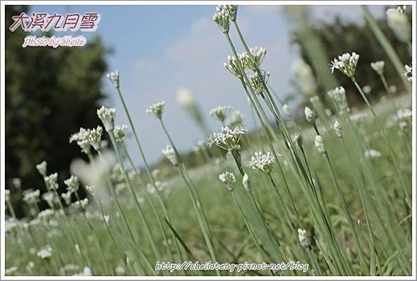 九月雪blog31.JPG